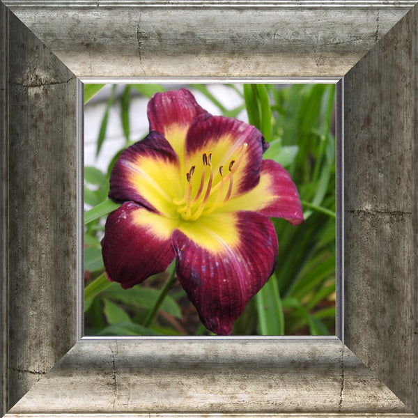 A Special Flower for that Special Someone in a 8 x 8 Print Framed in a Silver Curved Frame - Schmidt Fine Art Gallery