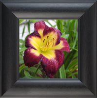 A Special Flower for that Special Someone in a 8 x 8 Print Framed in a Black Curved Frame - Schmidt Fine Art Gallery