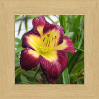 A Special Flower for that Special Someone by Lowe in a 8 x 8 Print Framed in Blonde Walnut - Schmidt Fine Art Gallery