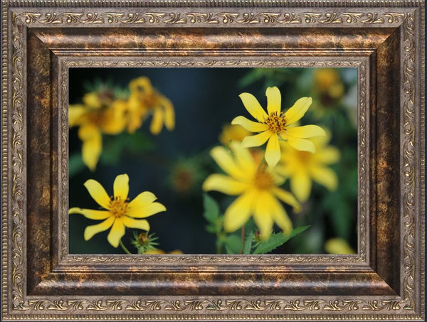 Arkansas Yellow flower Close up and personal by Murchison in a 6 x 9 print framed - Schmidt Fine Art Gallery