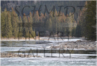 Bow River in Spring in a 16 x 24 Metal Print - Schmidt Fine Art Gallery
