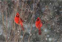 Cardinal Love .. Birds in Winter in a 24 x 36 Poster - Schmidt Fine Art Gallery