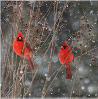 Cardinal Love .. Birds in Winter in a 4 x 4 Acrylic - Schmidt Fine Art Gallery