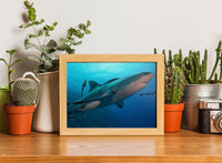 Up Close and Personal Shark in a 5 x 7 Unframed Print - Schmidt Fine Art Gallery