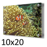 GBR Clown Fish and Anemone in a 10 x 20 Acrylic Print - Schmidt Fine Art Gallery