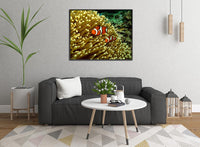 GBR Clown Fish and Anemone in a 16 x 20 Canvas - Schmidt Fine Art Gallery