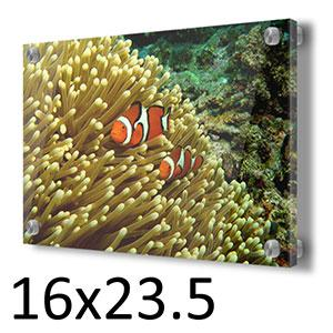 GBR Clown Fish and Anemone in a 23.5 x 16 Acrylic - Schmidt Fine Art Gallery