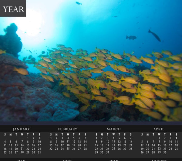 Great Barrier Reef Yellow School of Fish Calendar - Schmidt Fine Art Gallery