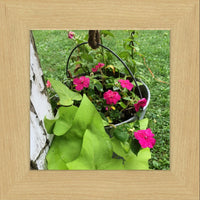 Hanging Flowers of Missouri in a 8 x 8 Print in a Blonde Maple Frame - Schmidt Fine Art Gallery