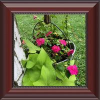 Hanging Flowers of Missouri in a 8 x 8 Print in a Beaded Mahogany Frame - Schmidt Fine Art Gallery