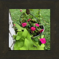 Hanging Flowers of Missouri in a 8 x 8 Print in an Espresso Walnut Frame - Schmidt Fine Art Gallery