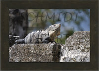 Iguana basking on a Mayan Temple 10 x 15 Framed - Schmidt Fine Art Gallery