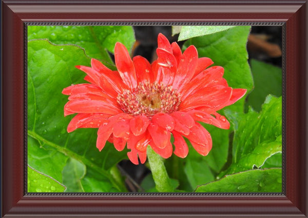 Lone Flower By Lowe in a 10 x 15 print Framed in a Beaded Mahogany Frame - Schmidt Fine Art Gallery