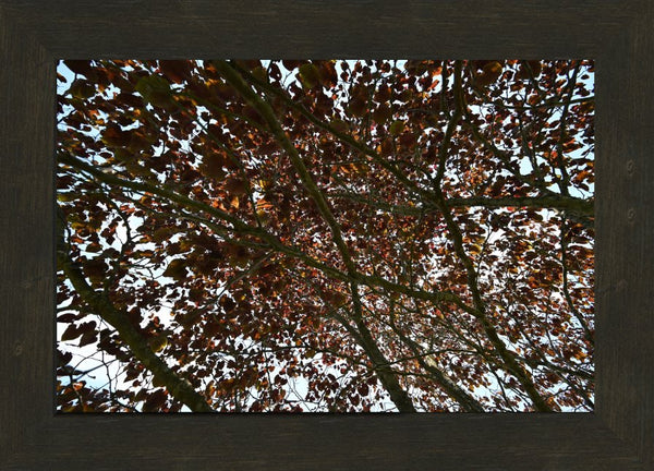 Mesmerizing Summer Leaves in a 10 x 15 Print in an Espresso Walnut Frame - Schmidt Fine Art Gallery