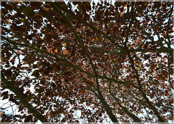 Mesmerizing Summer Leaves in a 5 x 7 Print - Schmidt Fine Art Gallery