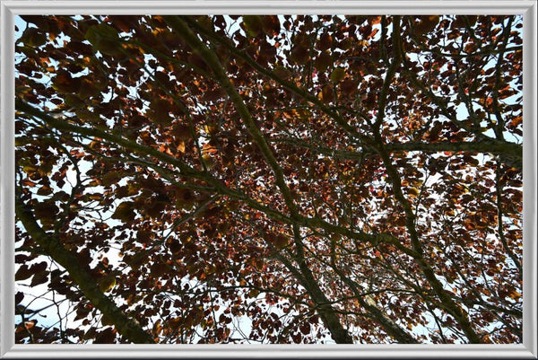 Mesmerizing Summer Leaves in a 6 x 9  Print Framed by Chalbaud in a Silver Metal Fram - Schmidt Fine Art Gallery