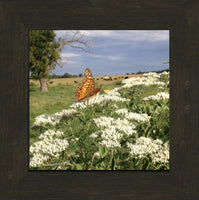 Midwest Butterfly in Summer by Lowe in an 8 x 8 Square Print Framed - Schmidt Fine Art Gallery