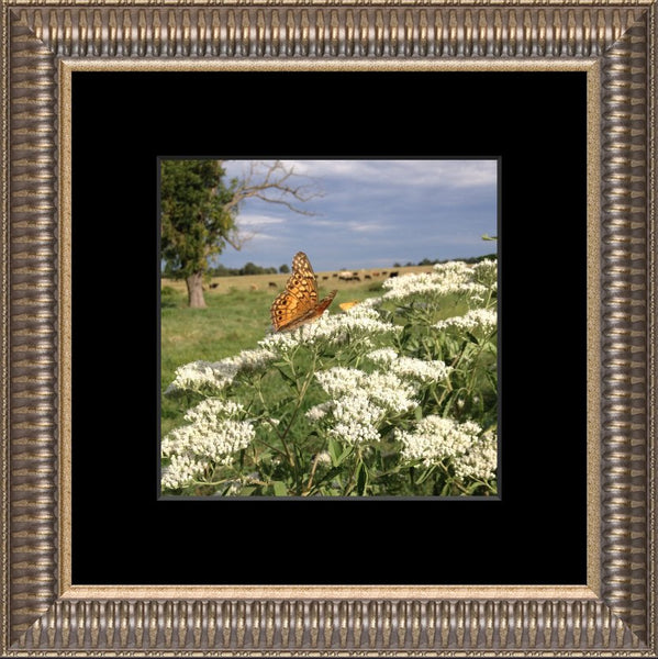 Midwest Butterfly in Summer by Lowe in an 8 x 8 Square Print Framed with Black Mat - Schmidt Fine Art Gallery