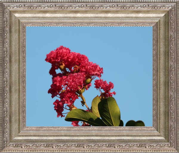 Midwest Red Spring Flower By Murchison in a 8 x 10 Print Framed in a Silver Ornate Frame - Schmidt Fine Art Gallery