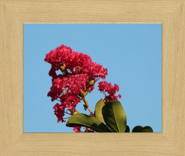 Midwest Red Spring Flower in a 8 x 10 Print in a Blonde Maple Frame - Schmidt Fine Art Gallery