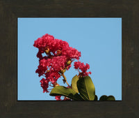 Midwest Red Spring Flower By Murchison in a 8 x 10 Print Framed in an Espresso Walnut Frame - Schmidt Fine Art Gallery