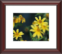 Yellow Spring Flowers in a 8 x 10 Print in a Beaded Mahogany Frame with mat - Schmidt Fine Art Gallery