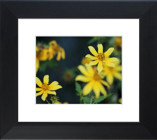 Yellow Spring Flowers in a 8 x 10 Print in a Black Flat Frame with mat - Schmidt Fine Art Gallery