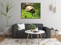 Not a Spring Chicken?  Spring Turtle by Lowe in a 16 x 20 Canvas - Schmidt Fine Art Gallery