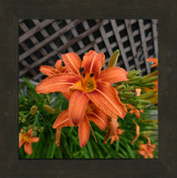Orange  Lilly in a 12 x 12 Print in a Walnut Espresso Frame - Schmidt Fine Art Gallery