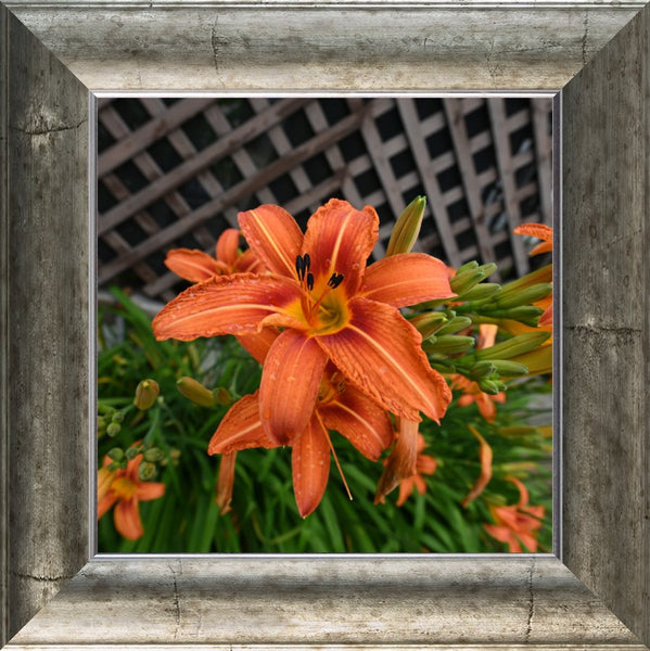Orange  Lilly by Schmidt  in a  12 x 12 Print Framed in a Silver Curved Frame - Schmidt Fine Art Gallery