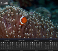 Pica Boo Clown Fish in a Calendar - Schmidt Fine Art Gallery