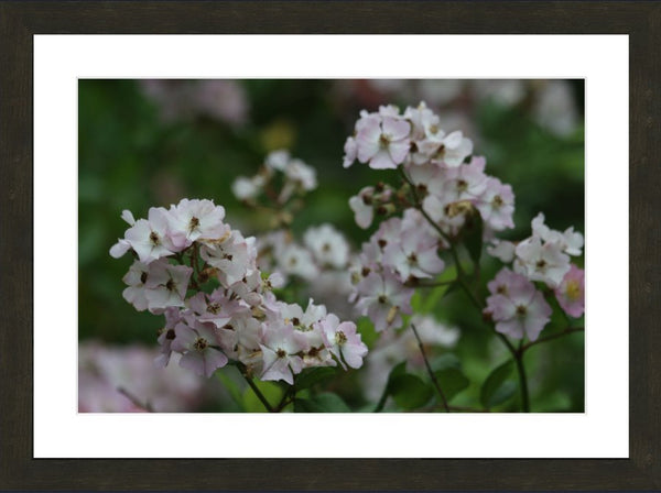 Pink and White Spring Flowers by Murchison in a 16 x 24 Print Framed in Espresso Walnut - Schmidt Fine Art Gallery