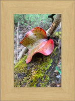 Red Leaf in Spring by Lowe in a 6 x 9 Print Framed in Blonde Maple - Schmidt Fine Art Gallery