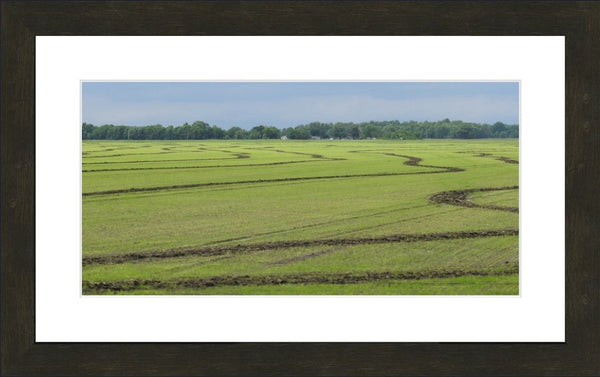Rice Fields of the Mid West by Lowe in a 10 x 20 print Framed with mat - Schmidt Fine Art Gallery