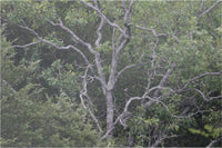 Spring Arkansas Tree 1000 Piece Puzzle - Schmidt Fine Art Gallery
