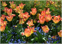 Spring multi colored flowers of Rothenburg ob der Tauber in a 4 x 5 Print - Schmidt Fine Art Gallery
