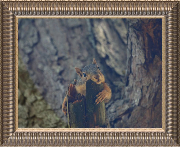 Squirrel chill-in out by Murchison in a 10 x 13 print Framed - Schmidt Fine Art Gallery