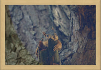 Squirrel Chill-In Out in a 20 x 30 Framed Print - Schmidt Fine Art Gallery