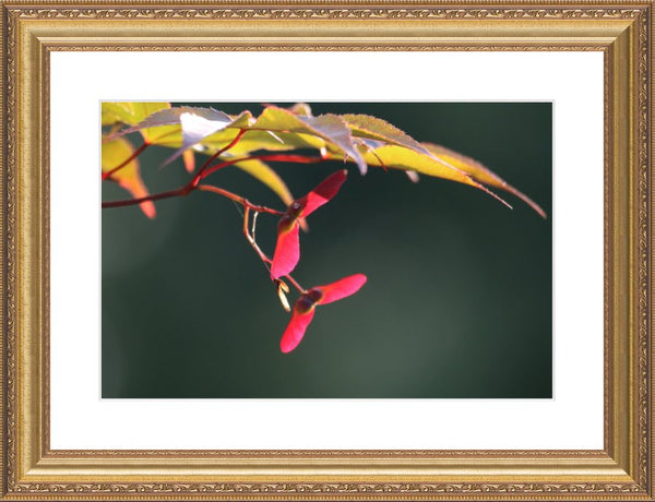 Summer Pedals by Murchison in a 12 x 18 Print Framed with mat in a Gold Ornate Frame - Schmidt Fine Art Gallery