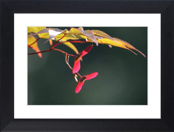 Summer Pedals in a 12 x 18 Print in a Black Flat Frame with mat - Schmidt Fine Art Gallery