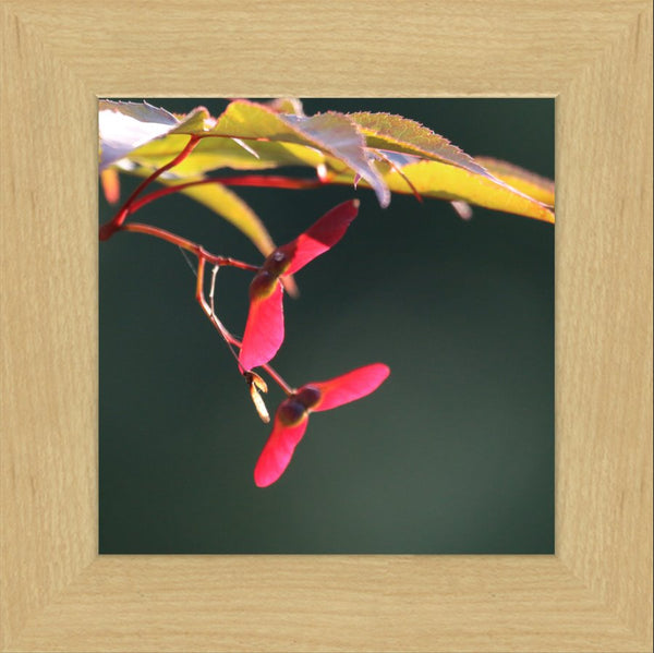 Summer Pedals by Murchison in a 8 x 8 Print Framed in a Blonde Maple Frame - Schmidt Fine Art Gallery