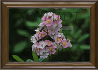 White and Pink Spring Arkansas Flowers in a 10 x 15 Walnet Frame - Schmidt Fine Art Gallery
