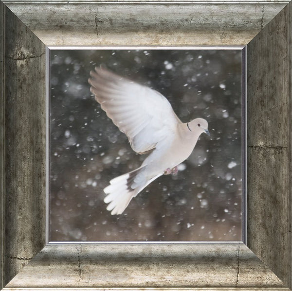 Winter Dove in a 10 x 10 Print framed with Silver Curved Frame - Schmidt Fine Art Gallery