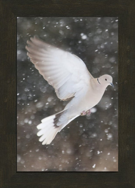 Winter Dove in a 10 x 15 Print framed with Espresso Walnut Frame - Schmidt Fine Art Gallery