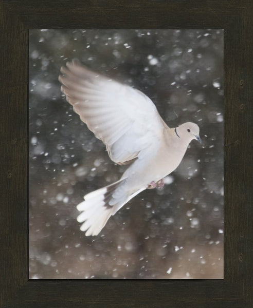 Winter Dove in a 11 x 14 Print framed with Espresso Walnut Frame - Schmidt Fine Art Gallery