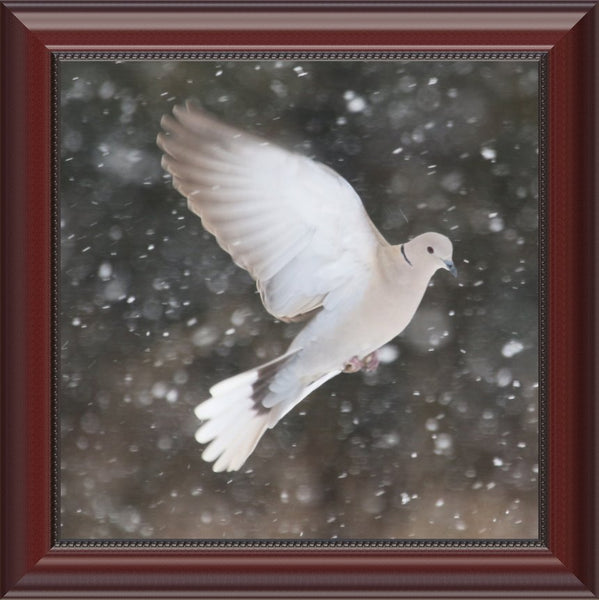 Winter Dove in a 12 x 12 Print framed with Beaded Mahongany - Schmidt Fine Art Gallery
