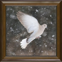 Winter Dove in a 12 x 12 Print in a Beaded Walnut Frame - Schmidt Fine Art Gallery