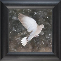 Winter Dove in a 12 x 12 Print framed with Black Curved Frame Schmidt Fine Art Gallery