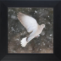 Winter Dove in a 12 x 12 Print framed with Black Flat Frame - Schmidt Fine Art Gallery