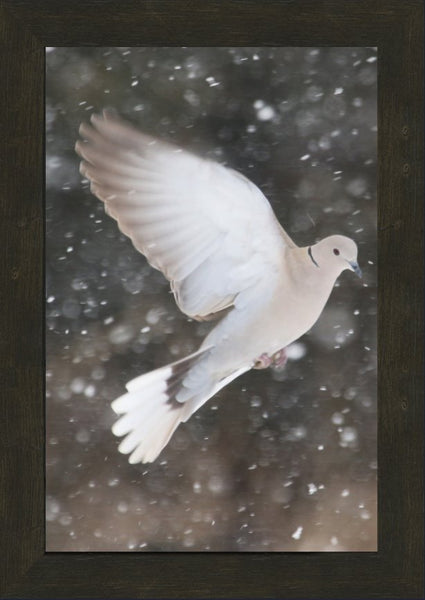 Winter Dove in a 12 x 18 Print framed with Espresso Walnut Frame - Schmidt Fine Art Gallery